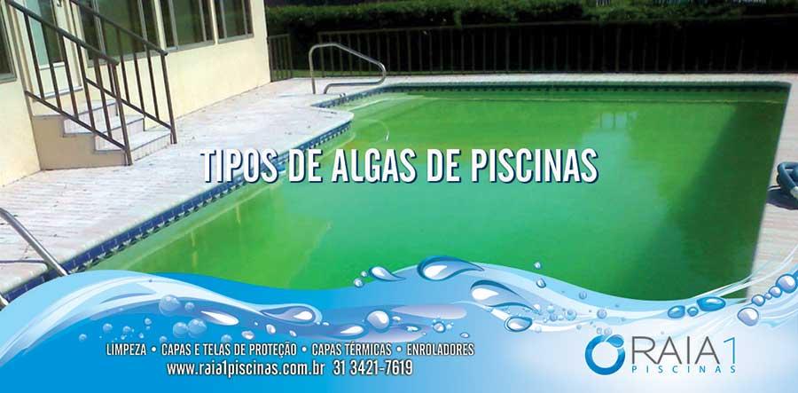 Tipos de algas de piscinas em bh raia1 piscinas for Tipo de piscinas